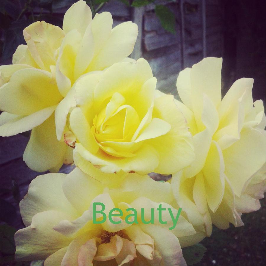 beauty, Feel Good