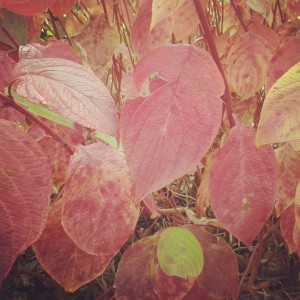 fall, autumn, leaf, abundance