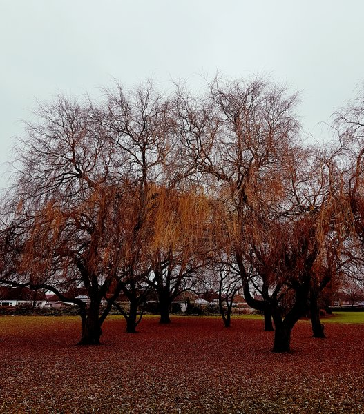 tree, five element acupuncture london, winter, acupuncture london